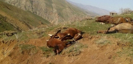 40 Horses Killed by Iranian Forces in Eastern Kurdistan